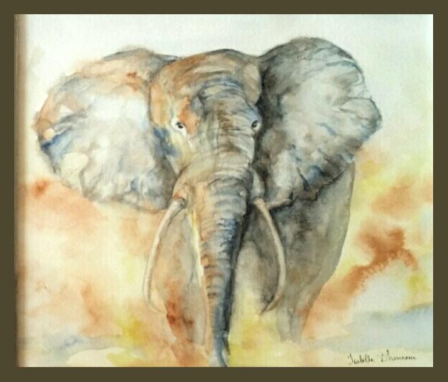 dhonneur_elephant